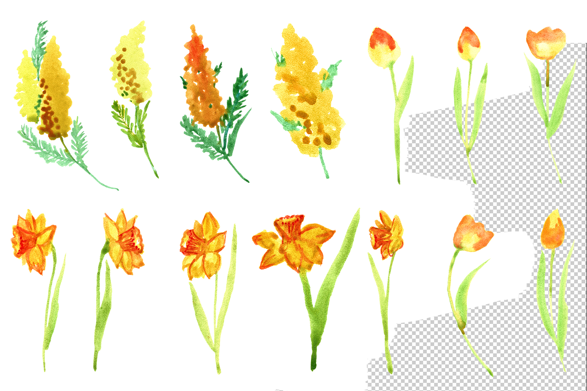 Watercolor yellow spring flowers example image 4