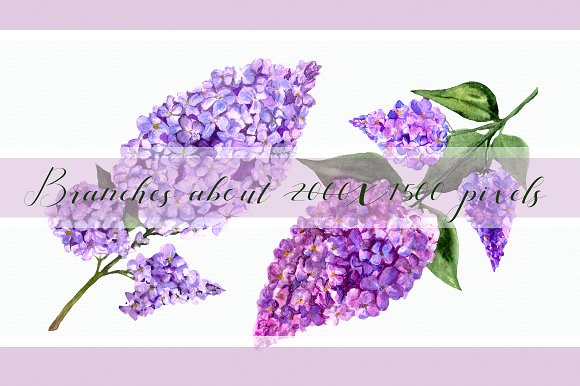 Watercolor Lilac Flowers Clipart Set example image 2