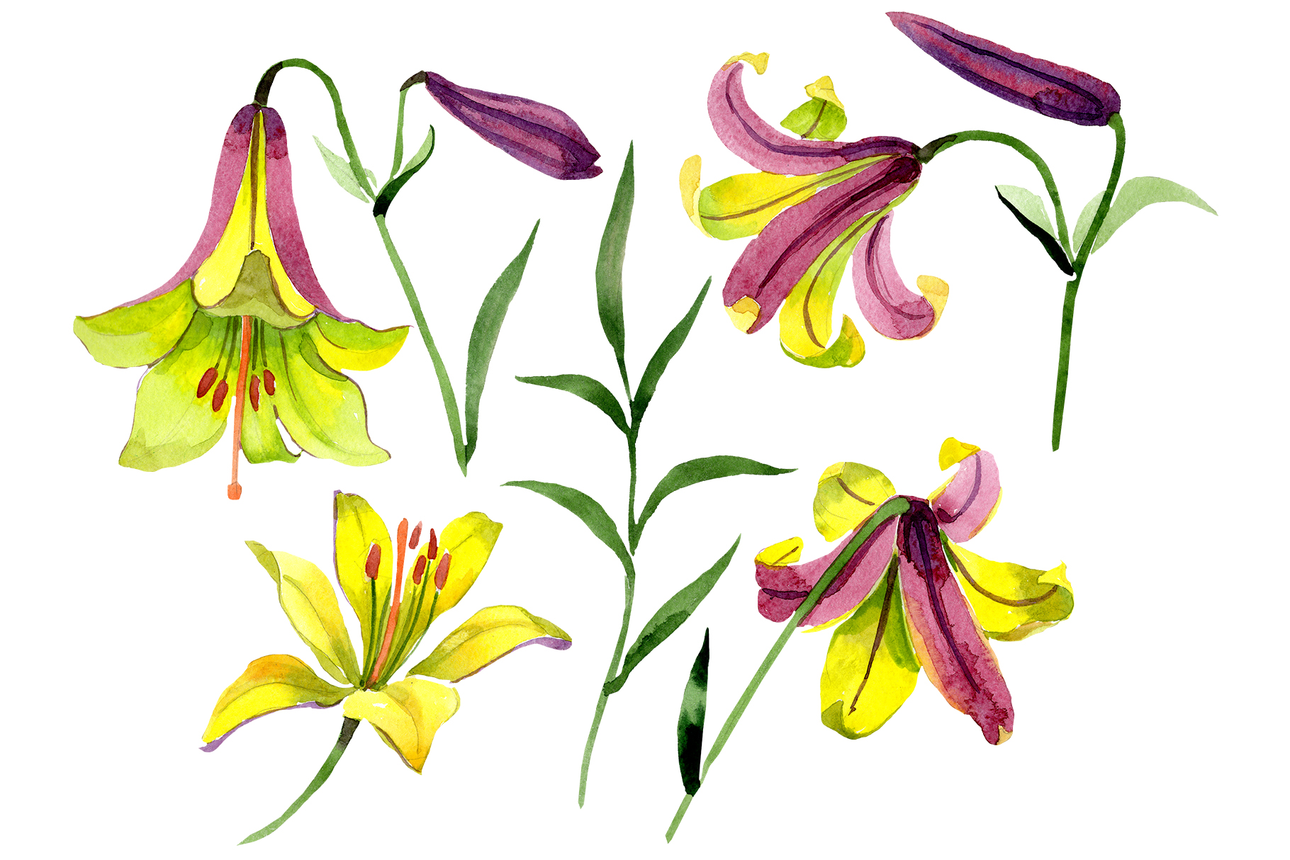 Wildflower lemon lily PNG watercolor set example image 1