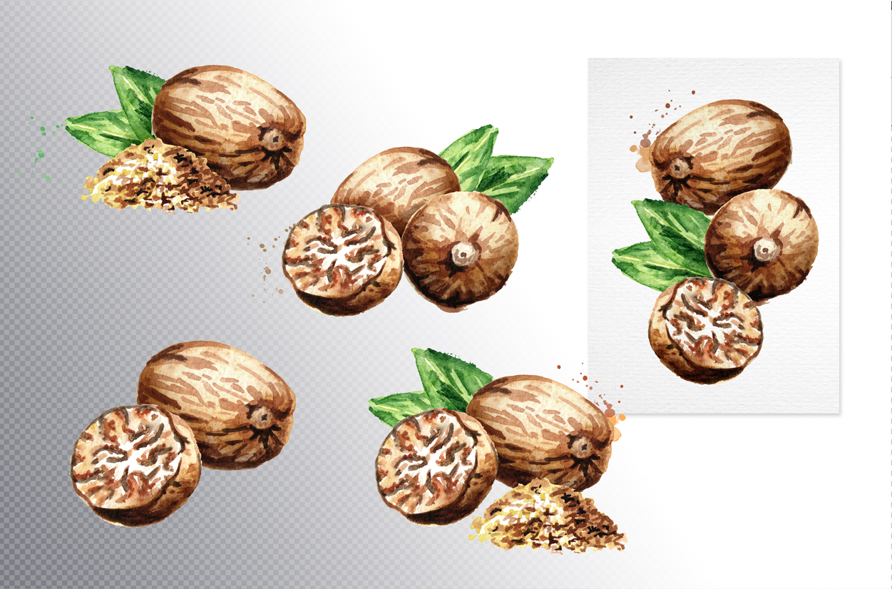 Nutmeg. Watercolor collection example image 2
