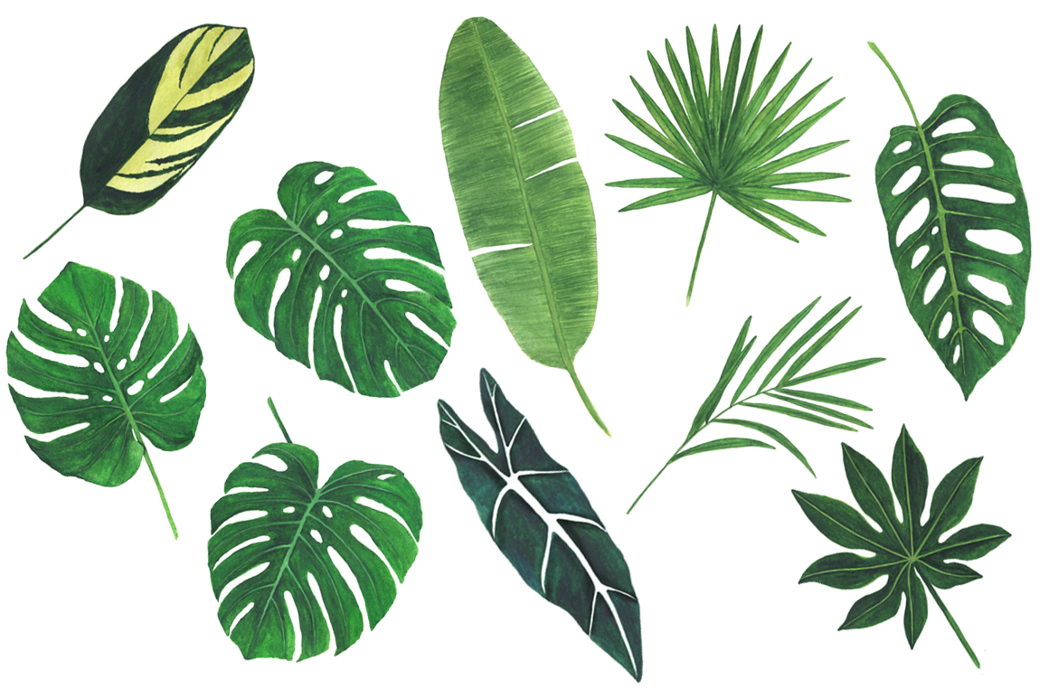 Watercolor tropical clipart example image 4