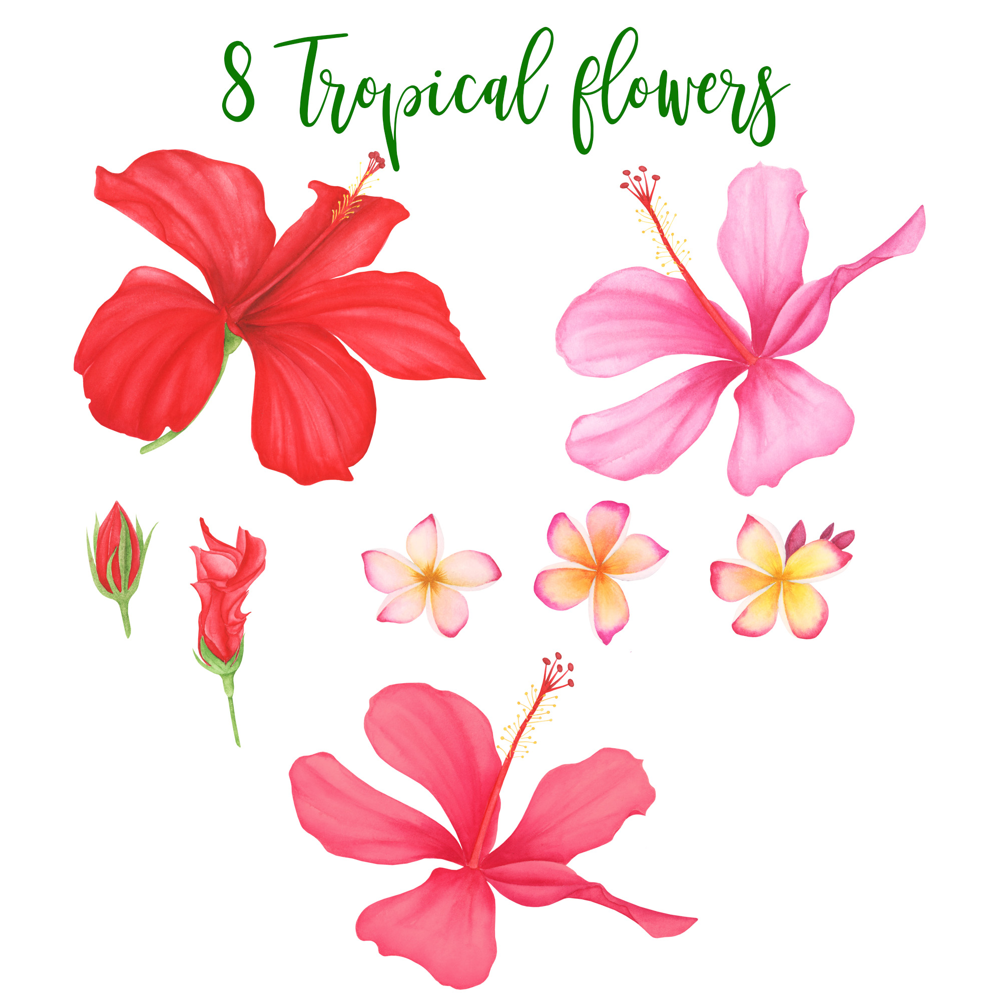 Watercolor Tropical Leaves and Flowers example image 2