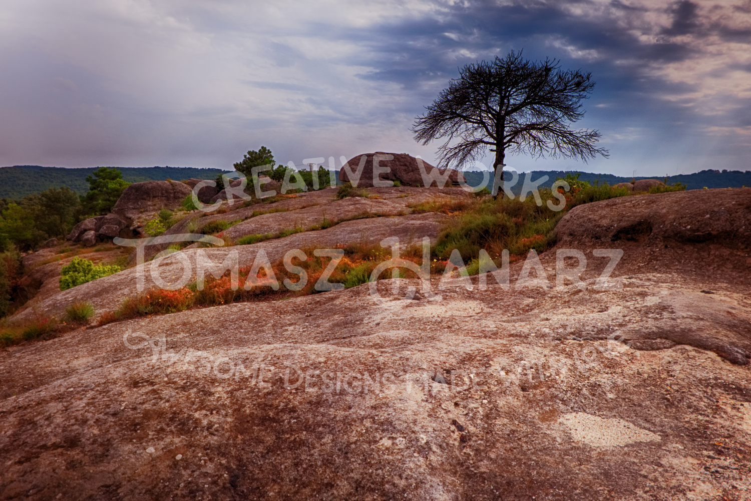 Alone Tree On The Rocky Terrain example image 1