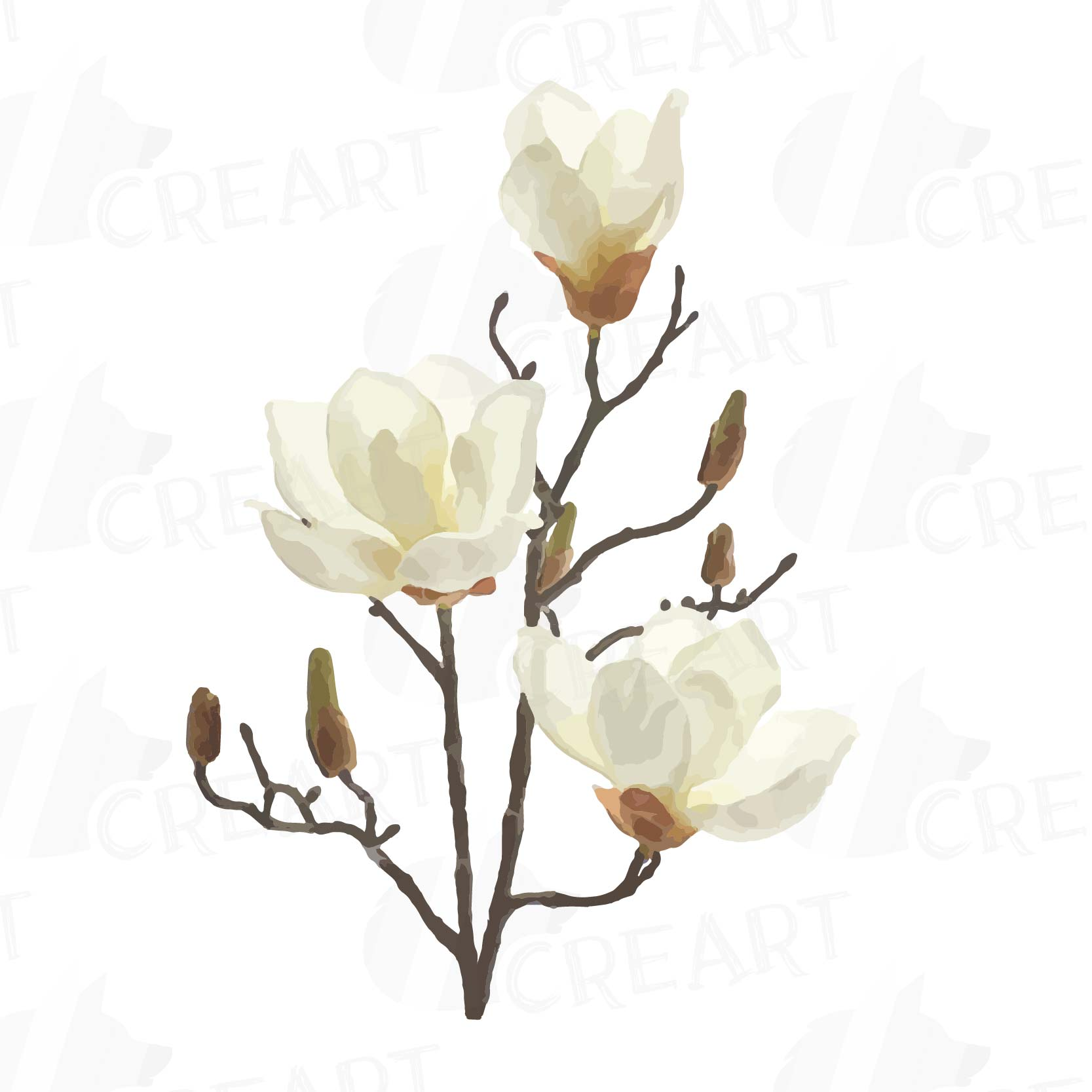 Watercolor White Magnolia Flowers And Leafs Clip Art Pack Magnolias