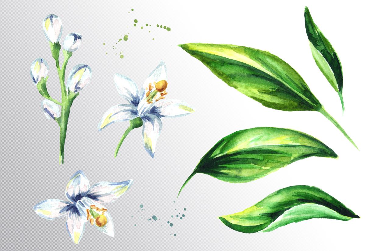 Neroli. Watercolor collection example image 4