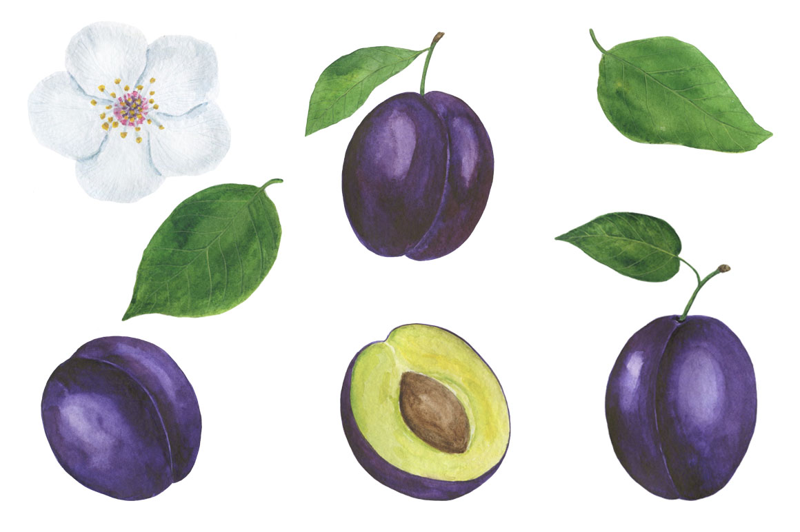 Set Plum watercolor example image 6