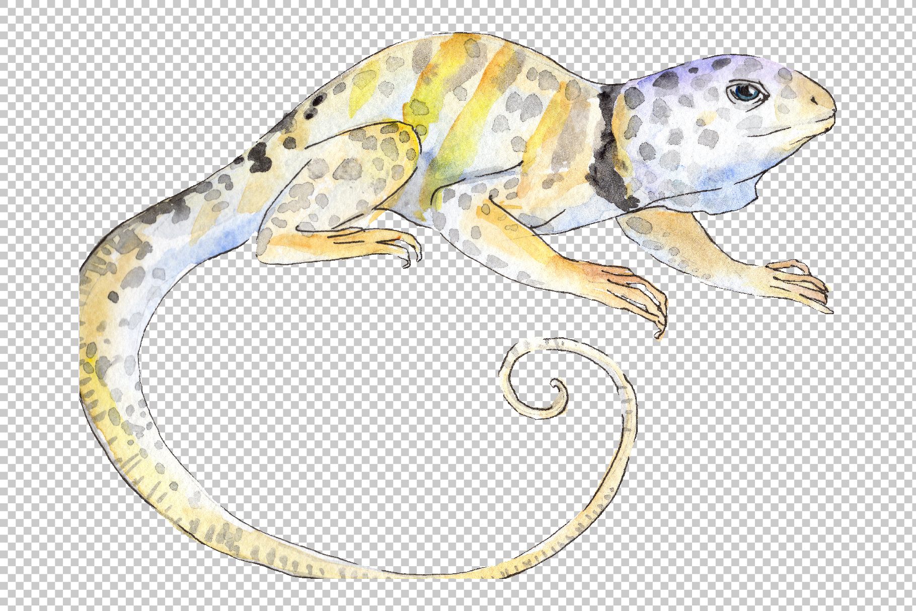 Iguana-1 Watercolor png example image 2