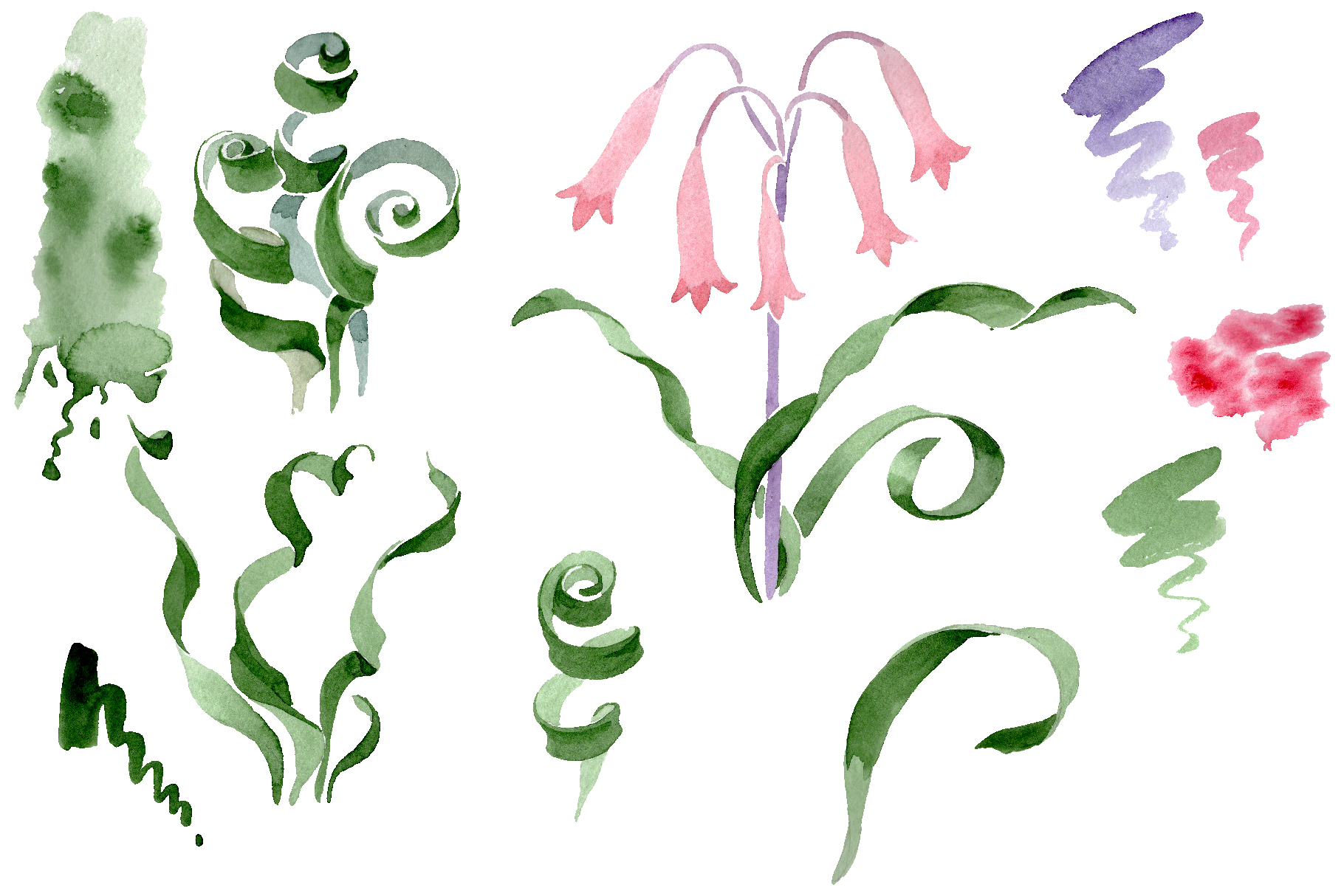 Albuca canadensis Watercolor png example image 2