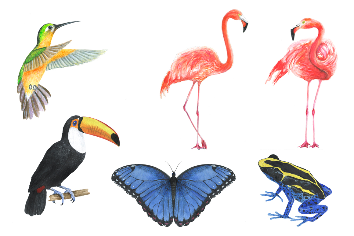 Watercolor tropical clipart example image 7