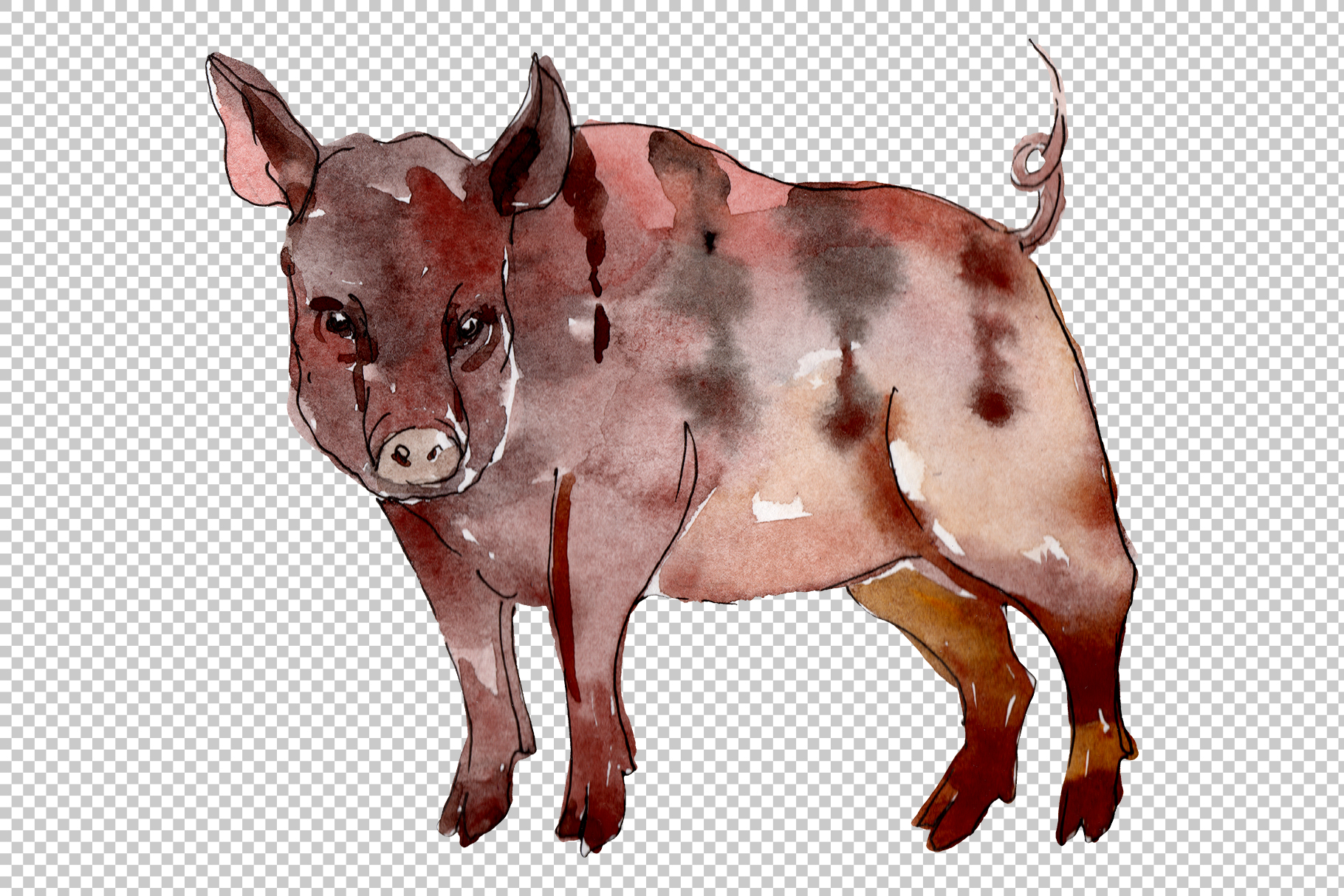 Farm animals pig boar Watercolor png example image 2