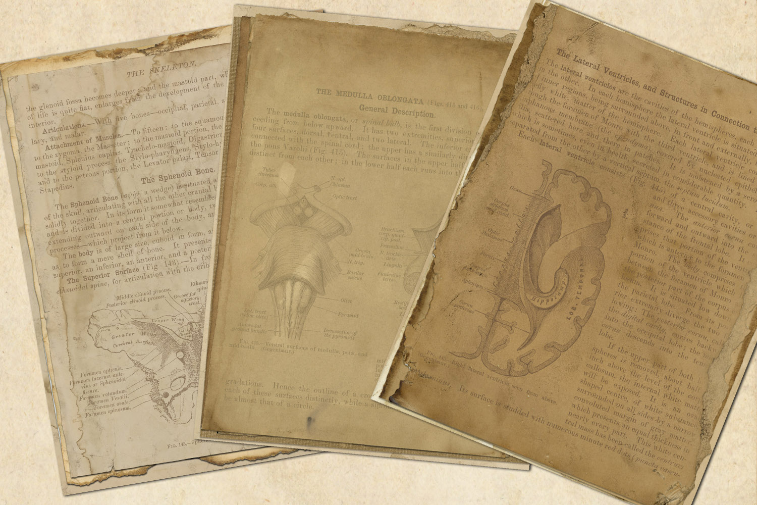 Antique Anatomy Notebook Paper example image 2