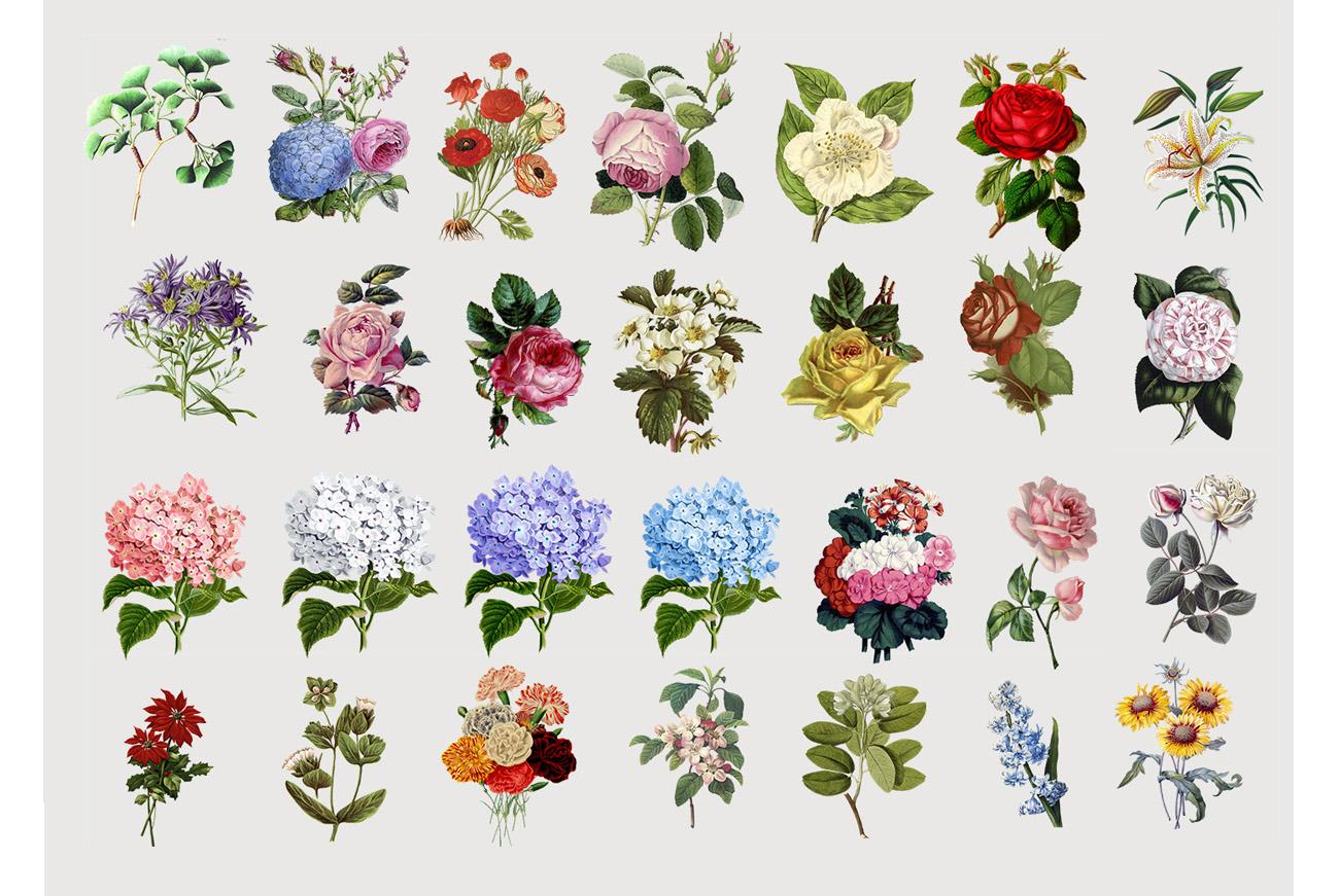 Botanicum - V.2|Elements Botanic example image 3