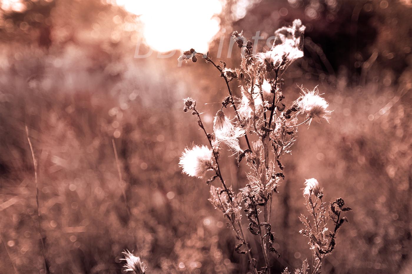 Nature photo, landscape photo, floral photo, flora photo example image 1