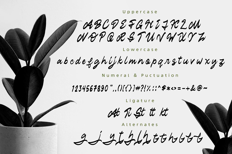 Staryl | Handwritten Script Font example image 5