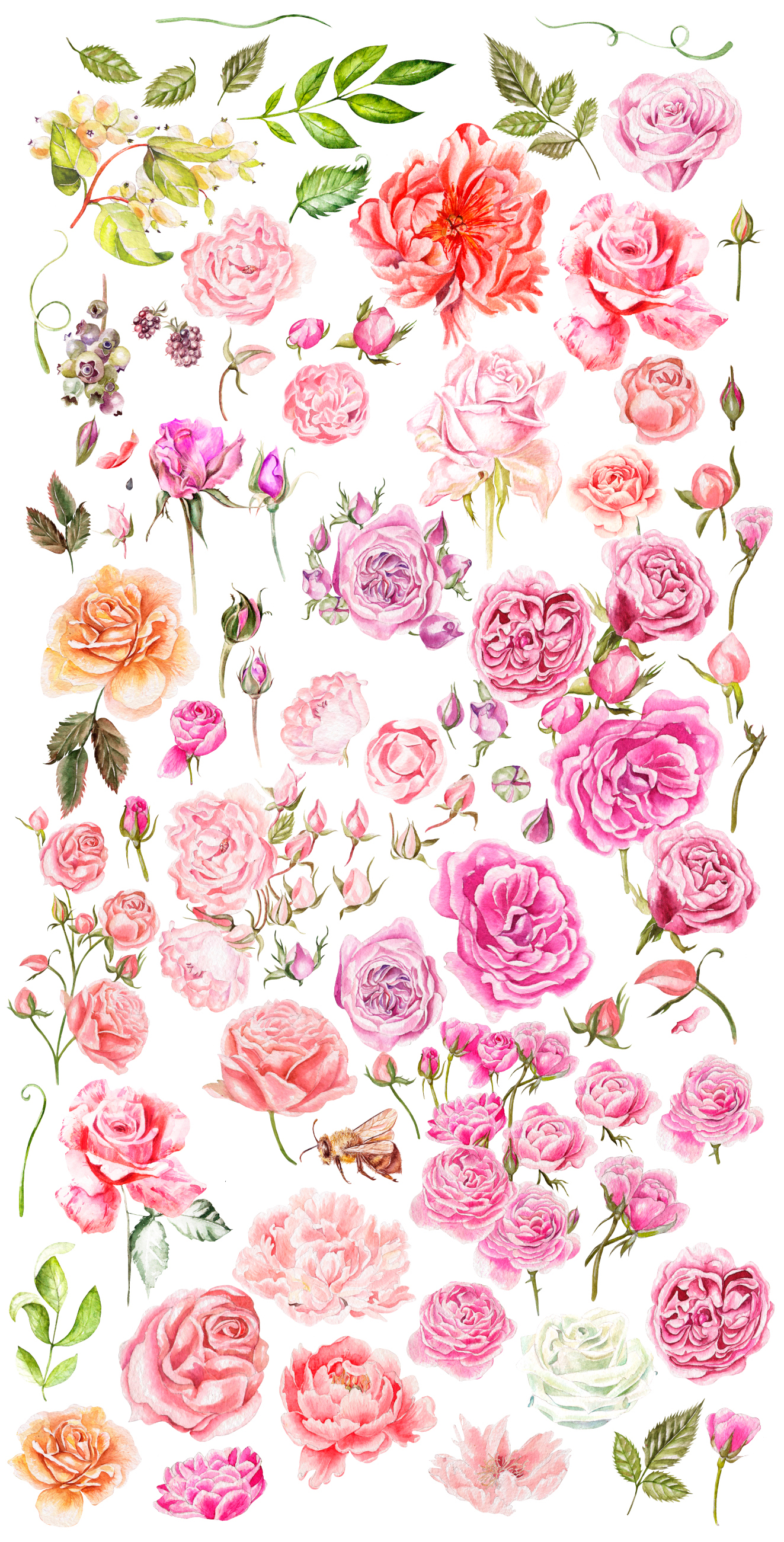 Hand drawn watercolor roses example image 4