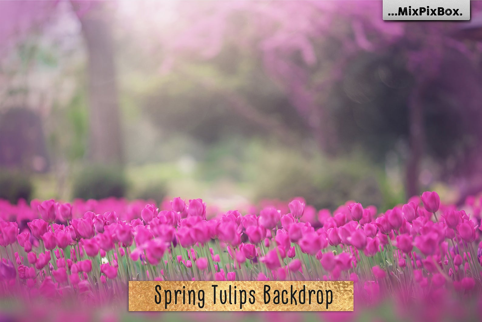 Spring Tulips Backdrop example image 1