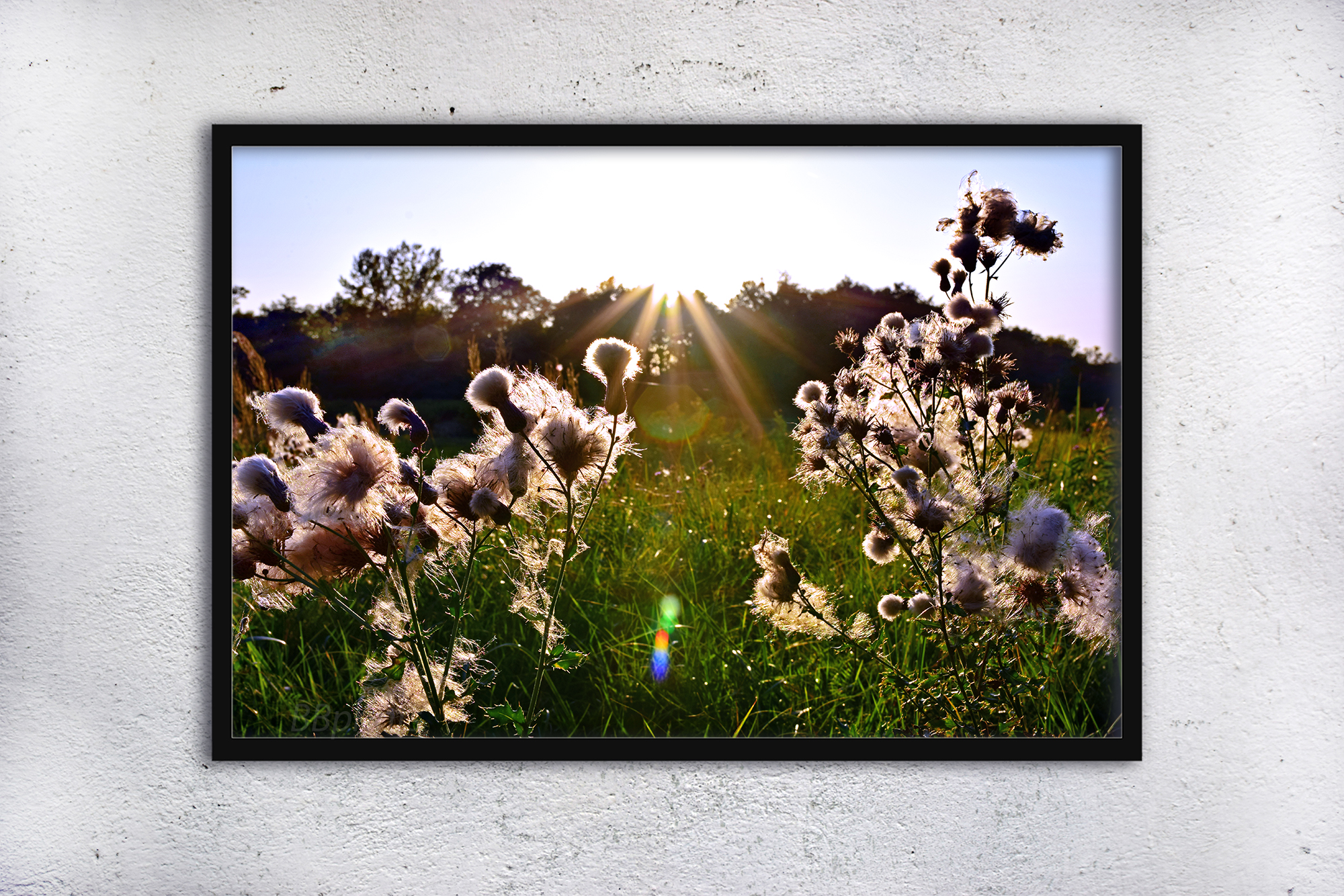 Nature photo, landscape photo, floral photo, fluffy grass example image 3
