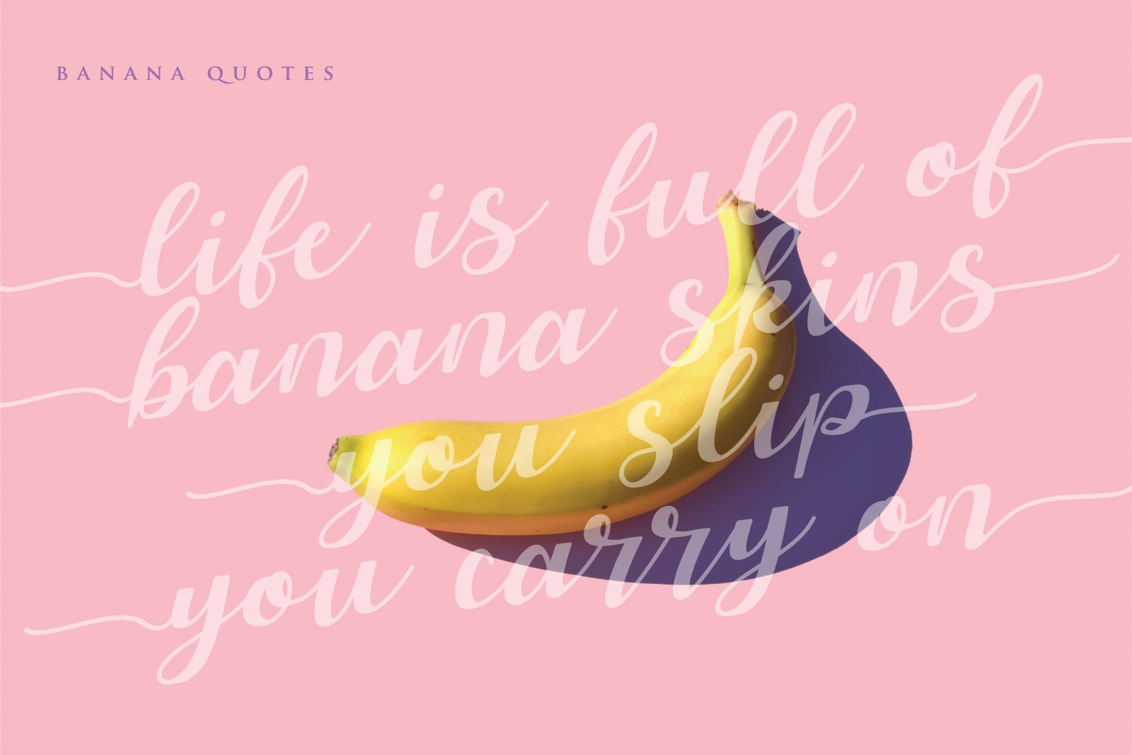 Allyca - Font Family example image 10