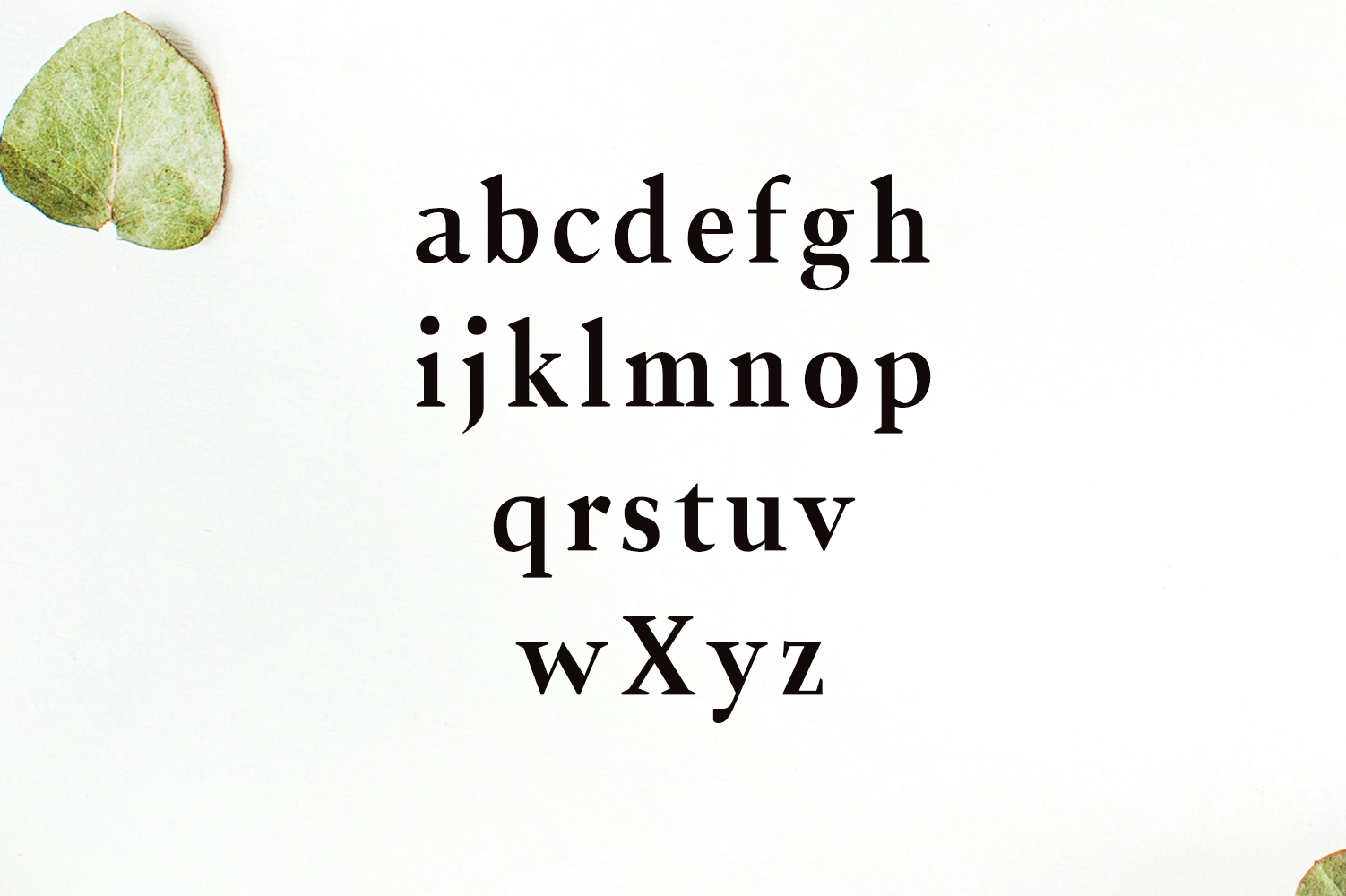 Jerrick Serif 6 Font Pack example image 4
