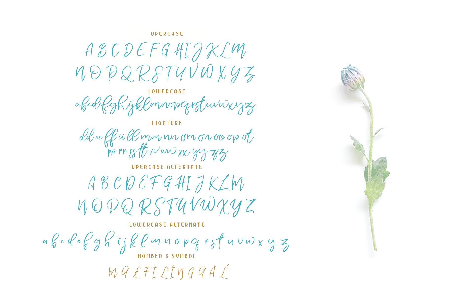 NERMOLA Scripcy Font example image 6