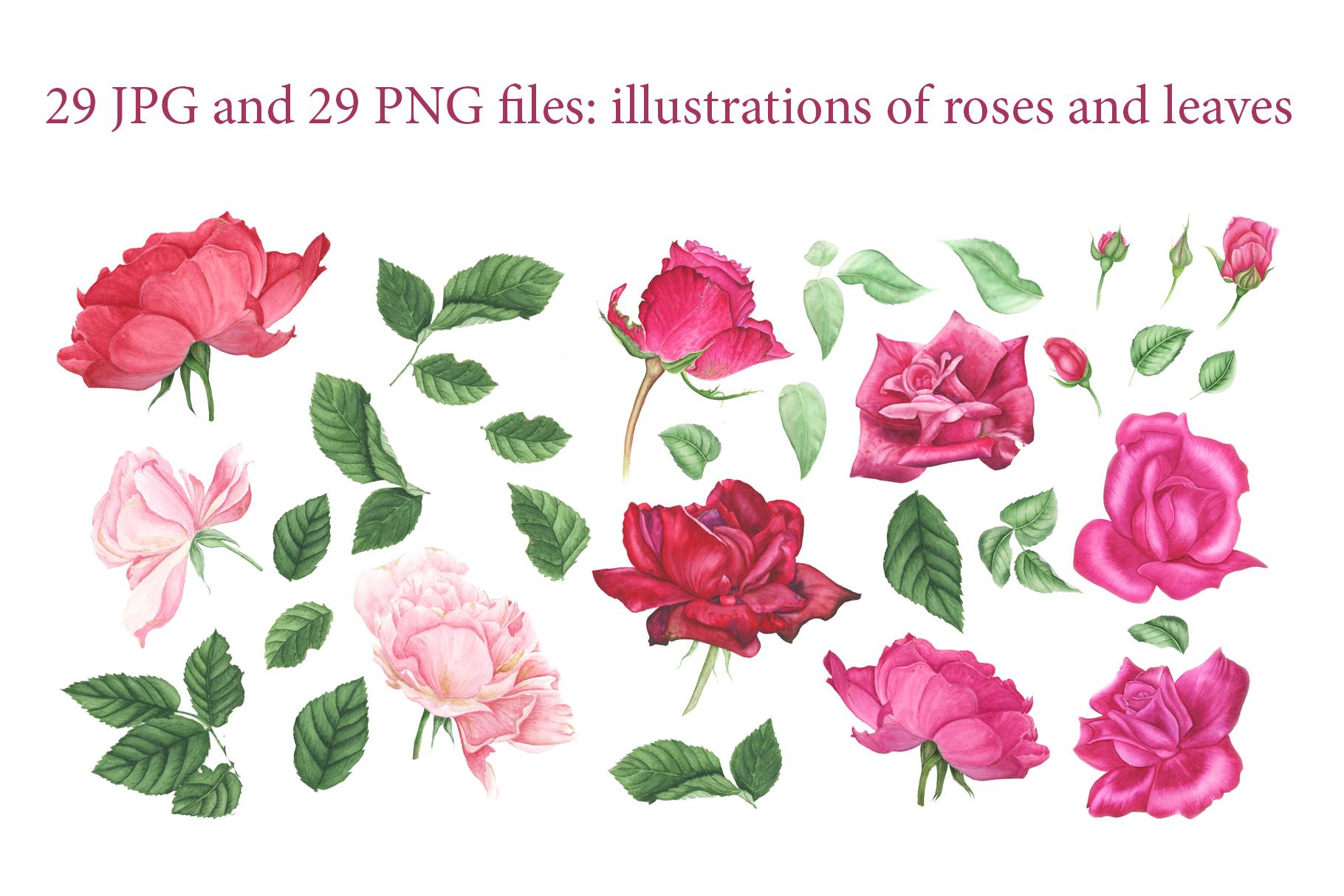 Roses garden watercolor set example image 2