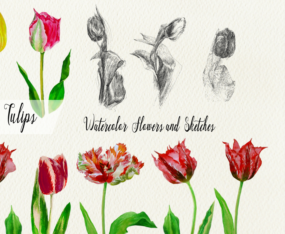 Red and Colored Tulips. Watercolor Clip Art example image 3
