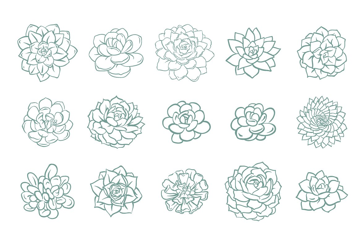 63 Succulents illustration set example image 2