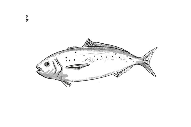 Blue Warehou New Zealand Fish Cartoon Retro Drawing example image 1