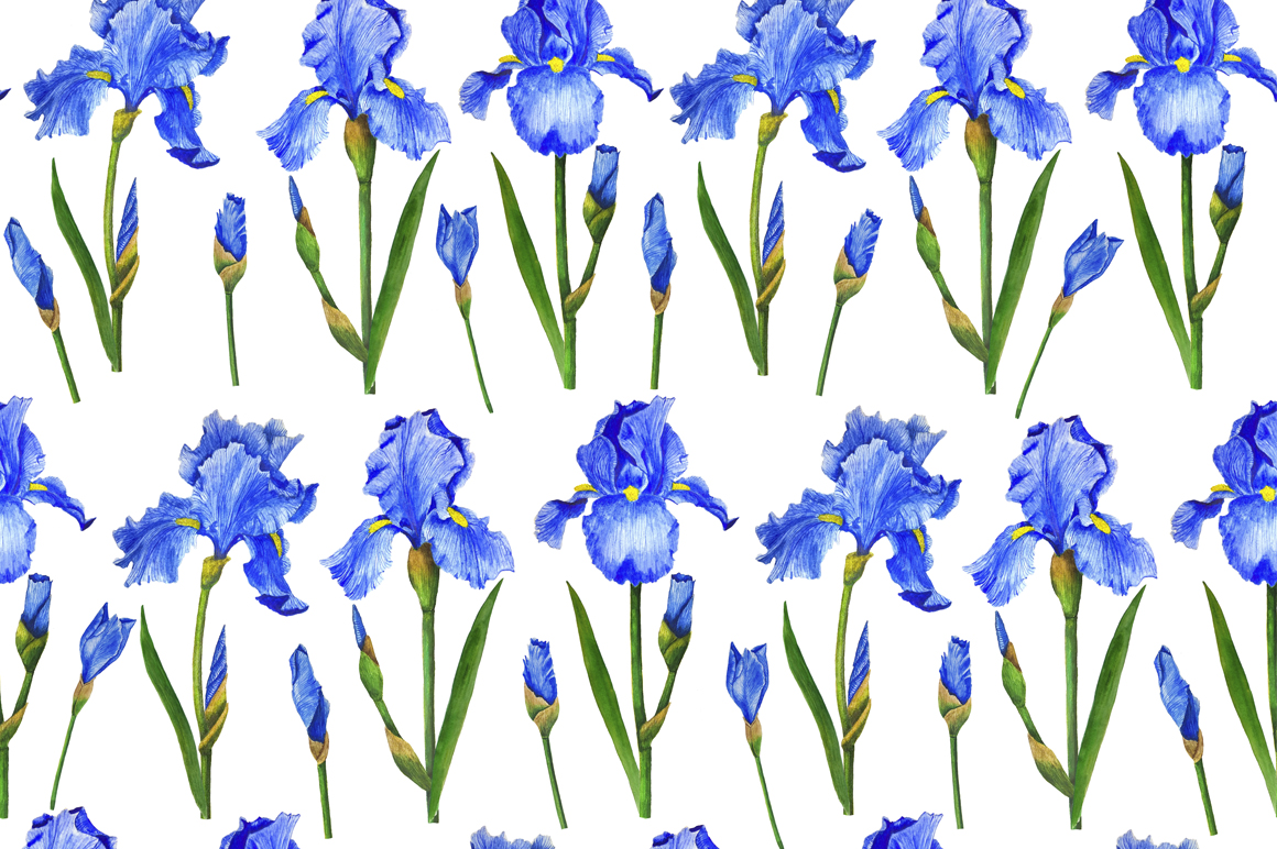 Watercolor flowers irises example image 3