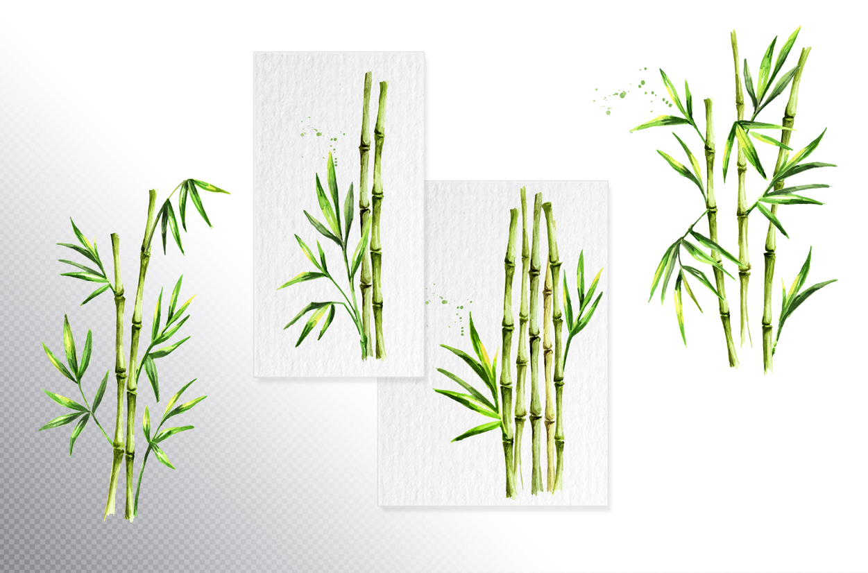 Bamboo. Watercolor collection example image 3