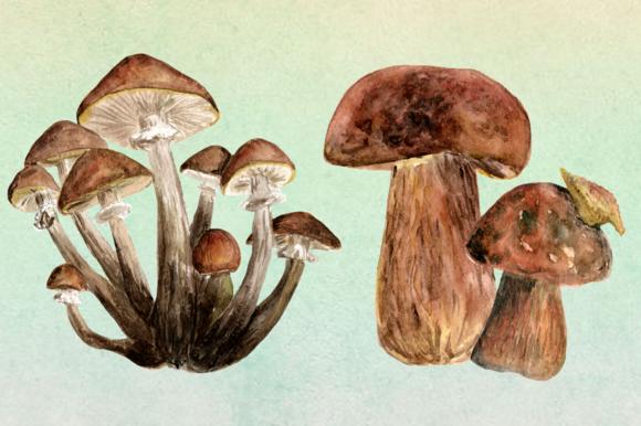10 Watercolor Mushroom Set + 3 Bonus example image 4