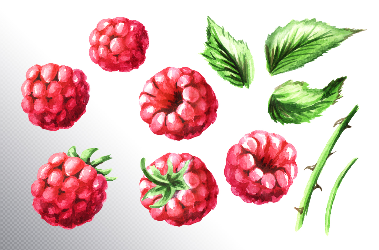 Raspberry. Watercolor collection example image 6
