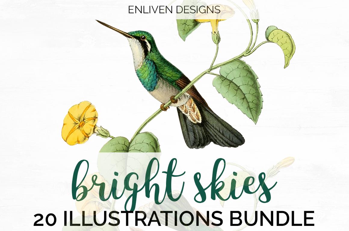 Hummingbird Bundle - Volume One - 20 Count example image 1