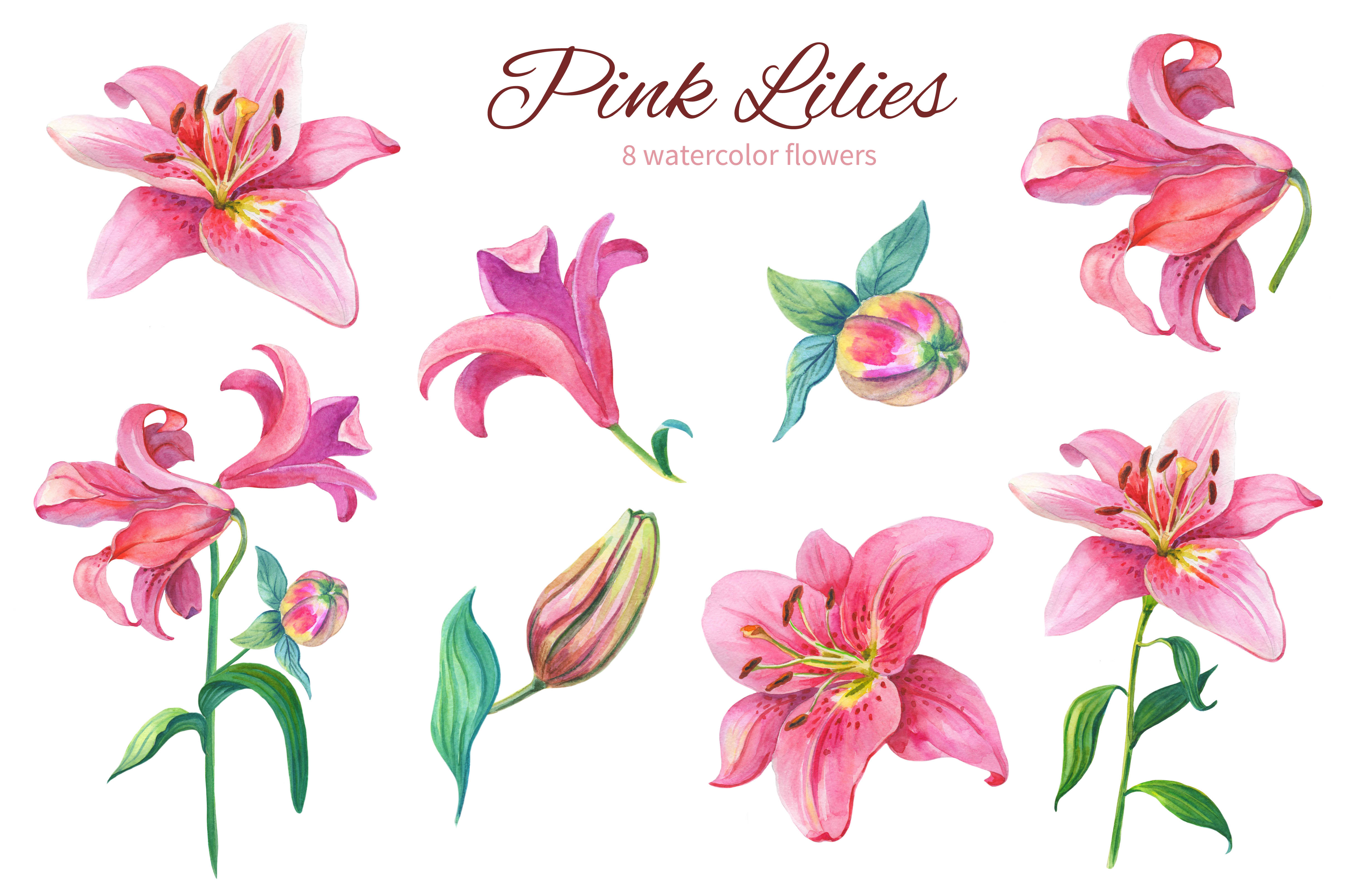 Pink Lilies.Watercolor clipart. example image 3
