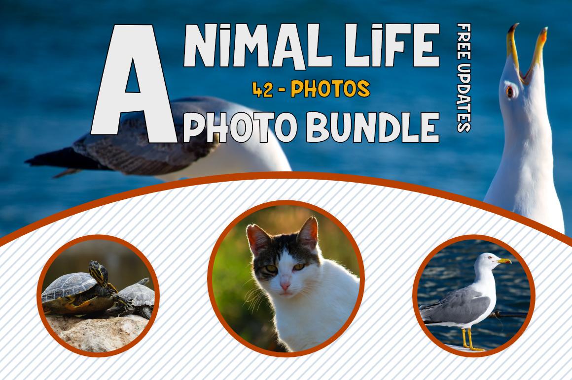 Animals Photo Bundle example image 1
