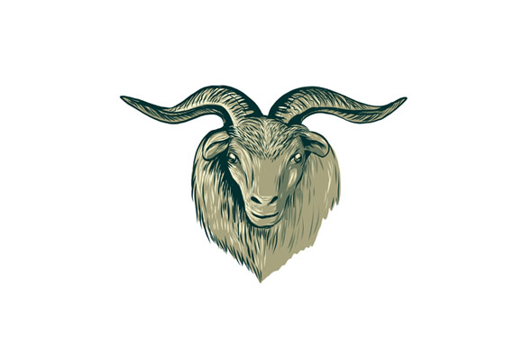 Cashmere Goat Head Drawing example image 1