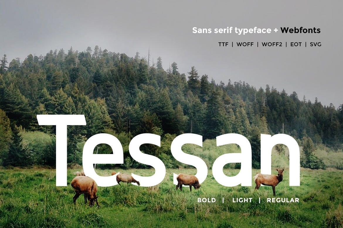 Best Selling 16 Webfonts. - 16 in 1 example image 4