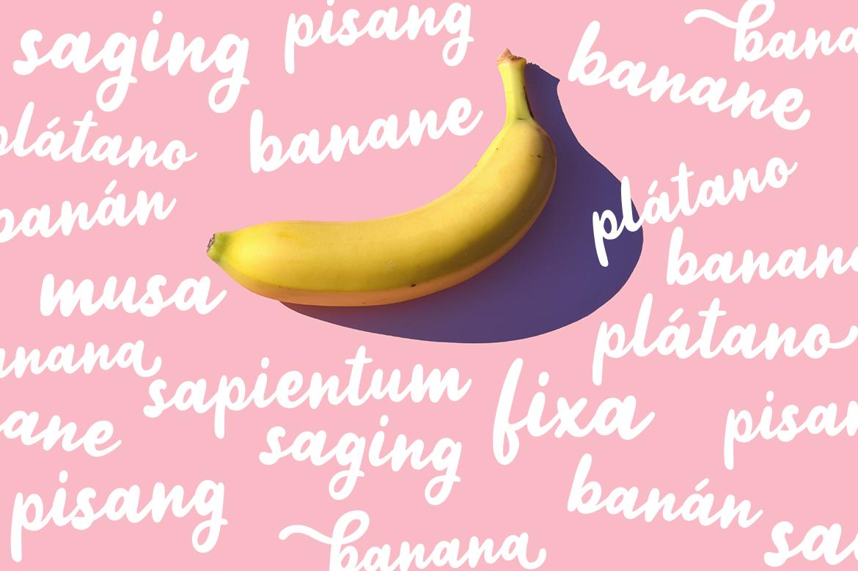 Jellly Bean Script & Sans Fun Font example image 5