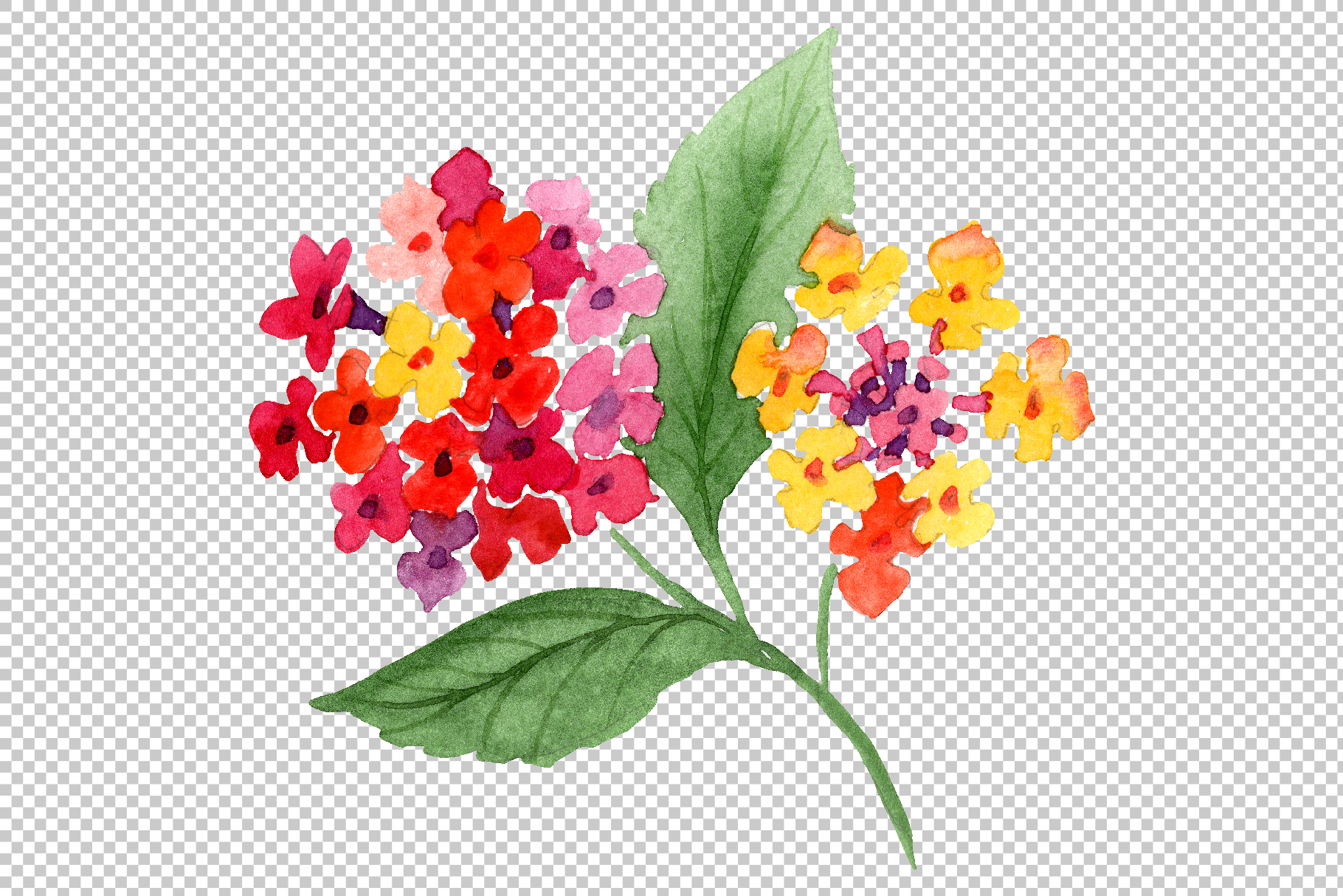 Red Lantana Watercolor png example image 6