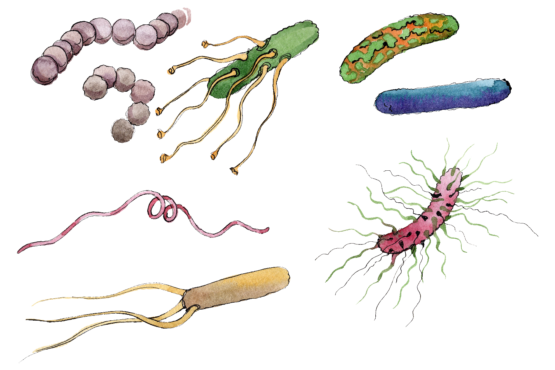 Microbes 1 Watercolor png example image 7