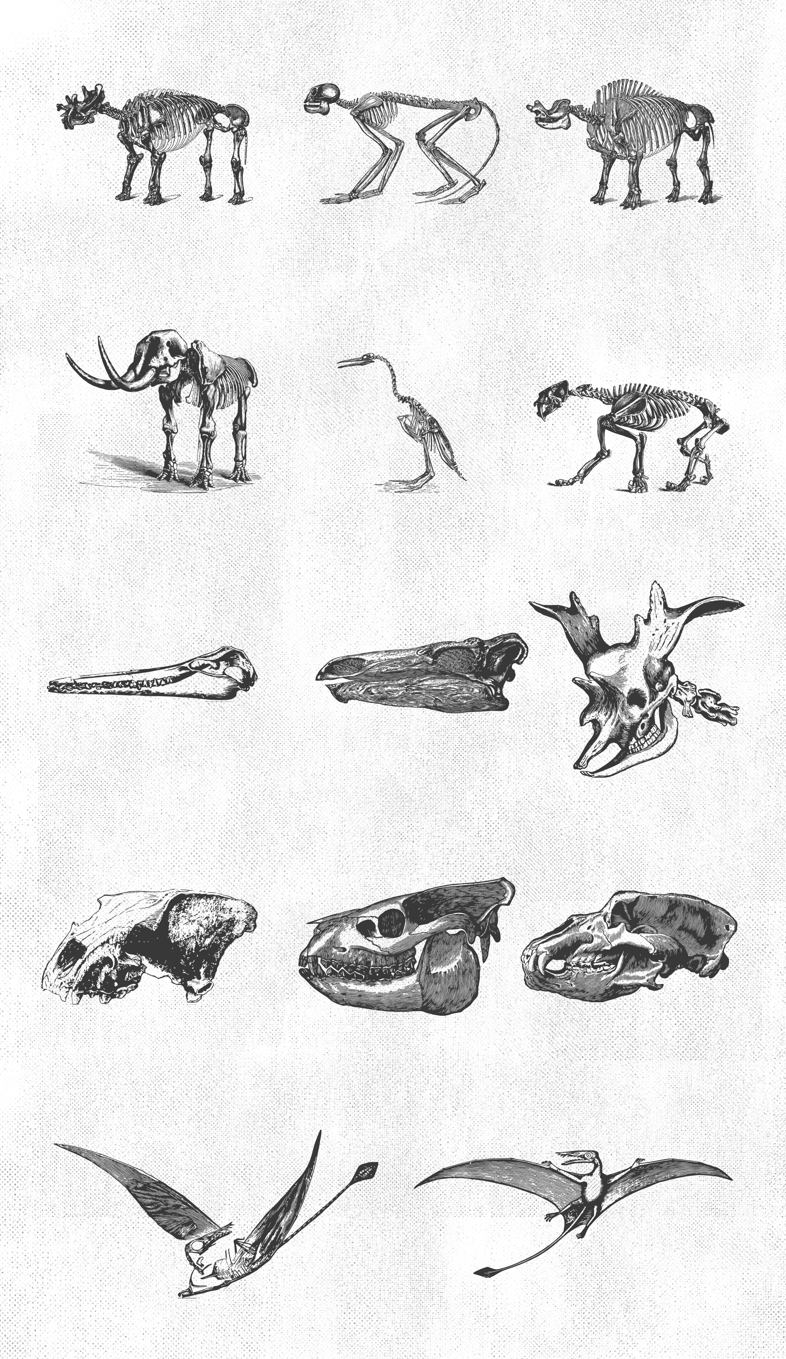 Paleontology Vintage Vector Illustrations 150 Items example image 2