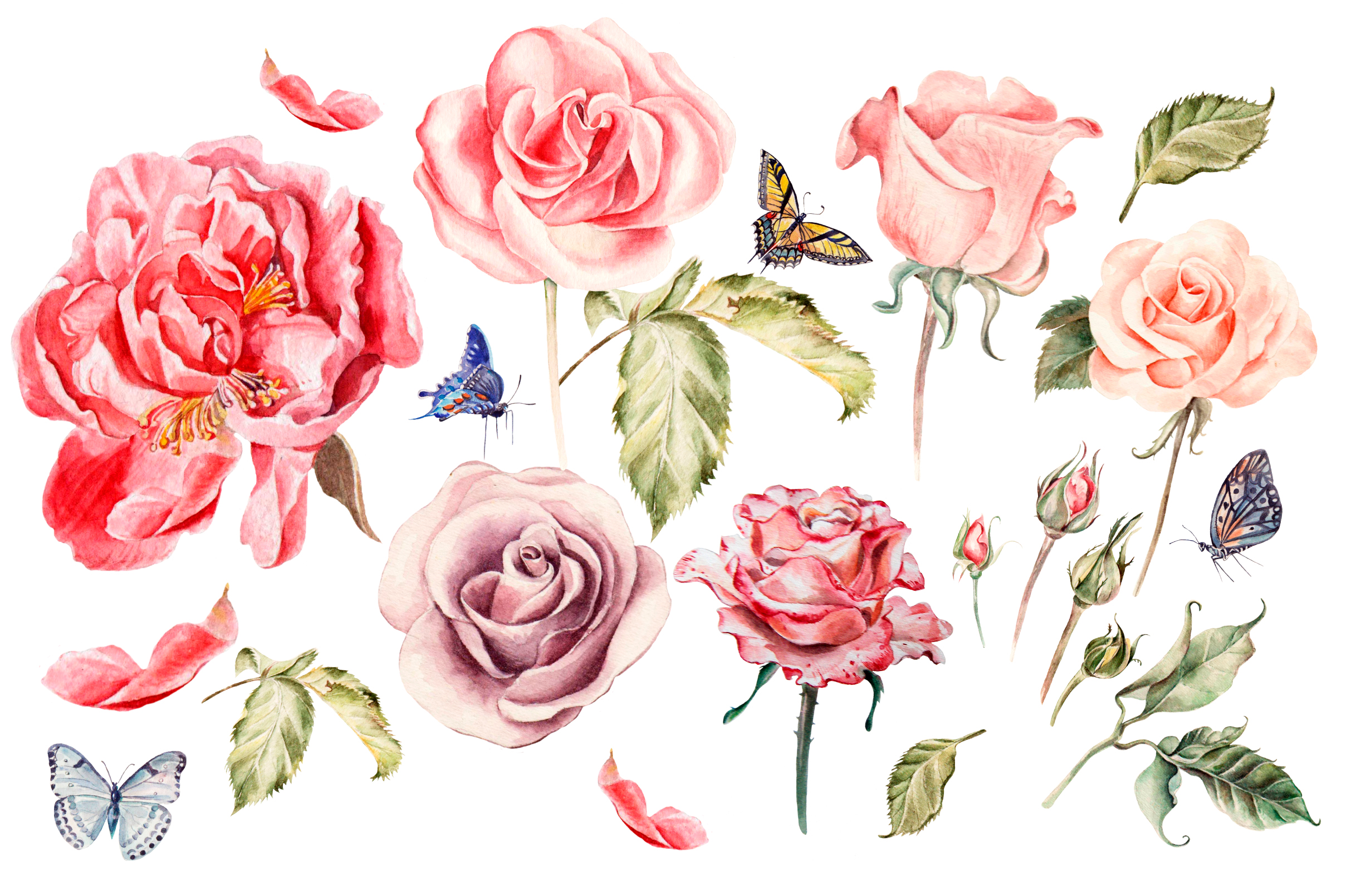 Hand drawn watercolor roses example image 2