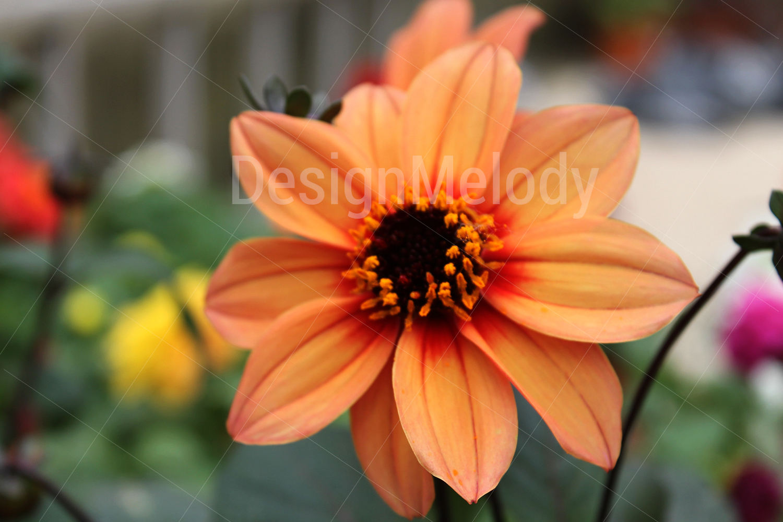 Vibrant Flowers example image 2