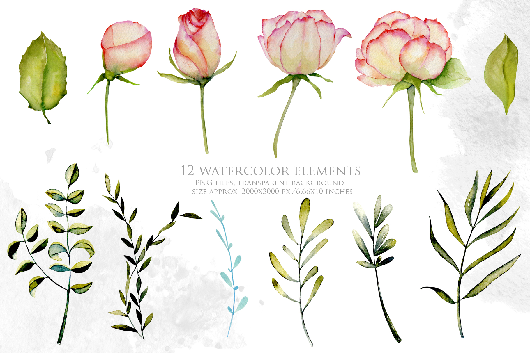 Alabama roses. Watercolor collection. example image 2