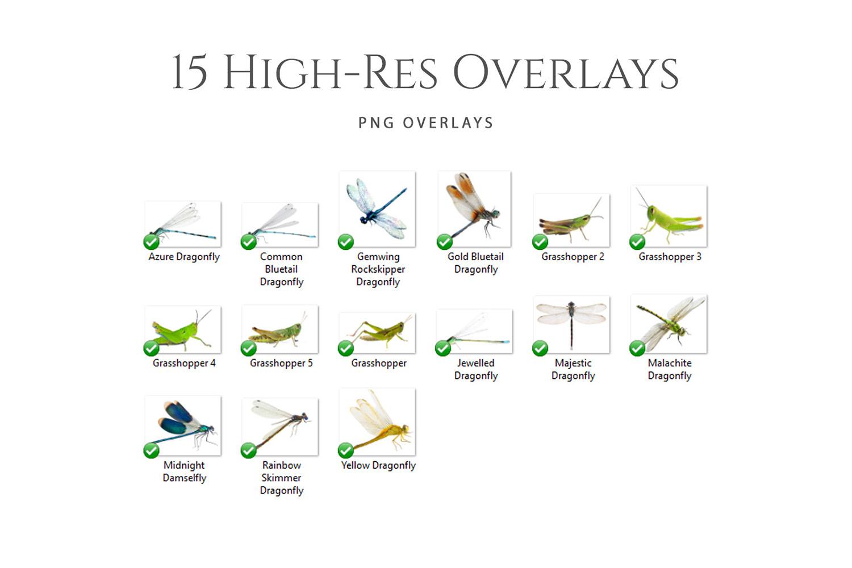 Fantasy Dragonflies & Grasshopper Photo Overlays example image 2