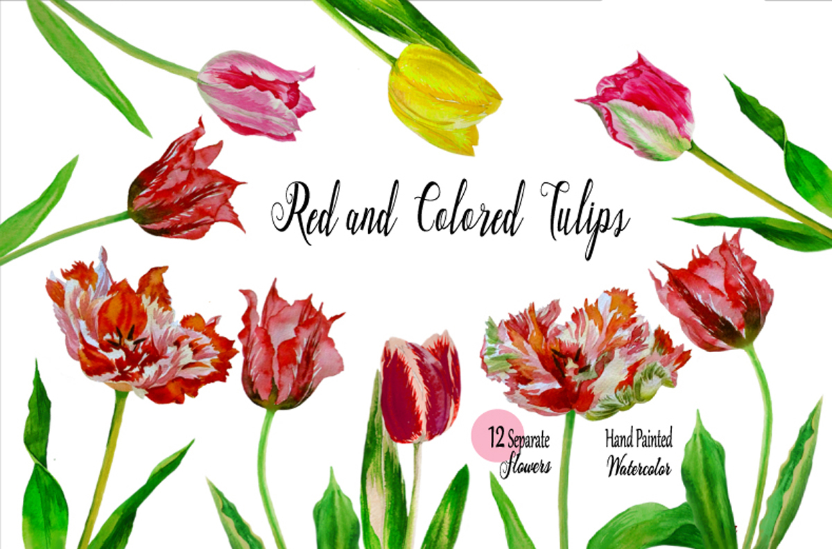 Red and Colored Tulips. Watercolor Clip Art example image 1