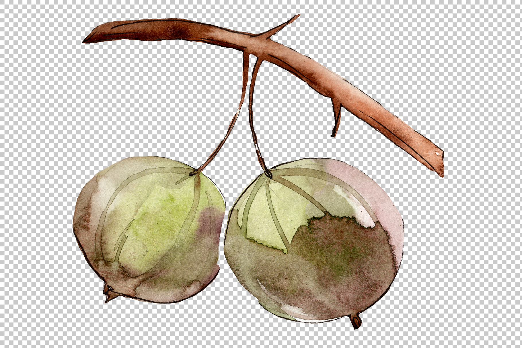 Gooseberry PNG watercolor plant set example image 4