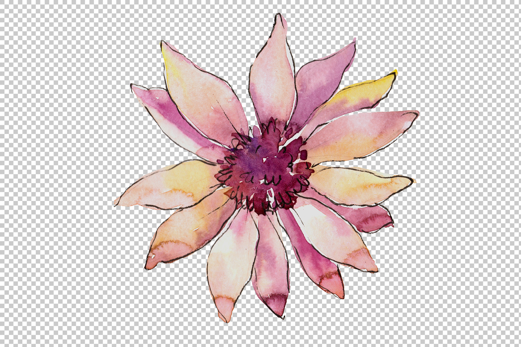 African Daisy Flower Watercolor Png Set