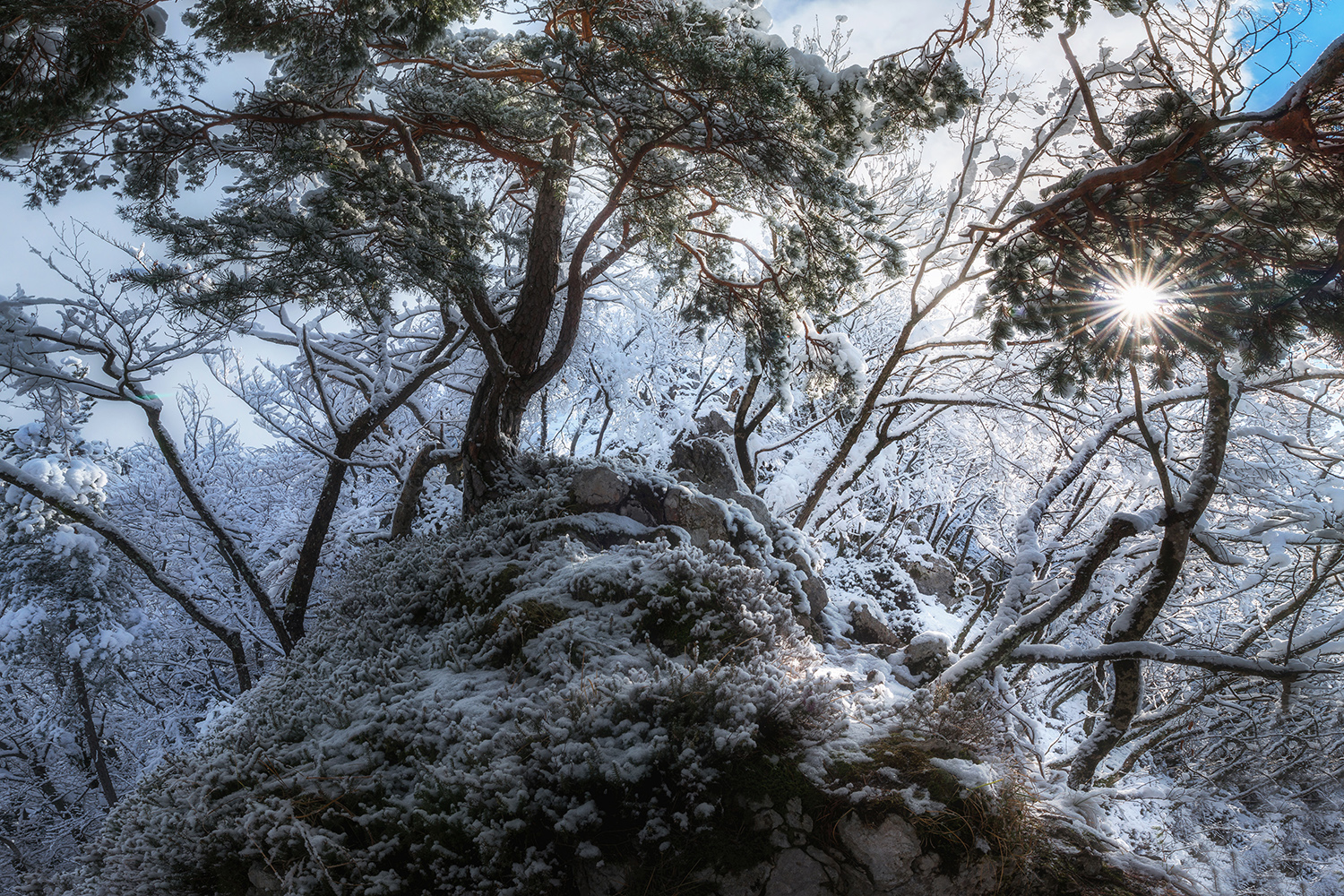Winter forest by Zavrsnica example image 1