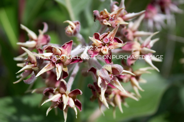 Botanical Photo Bundle, Large Nature Photos example image 4